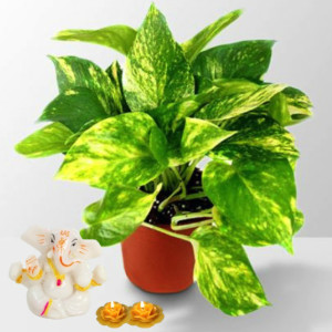 Rolling Nature Auspicious Ganesha and Money Plant in Brown Pot